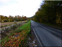 SU8214 : Looking east along the B2141 from the road to Upton Farm by Shazz