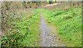 J3976 : Path, Redburn, Holywood by Albert Bridge
