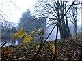 H4772 : Autumn scene, Cranny by Kenneth  Allen