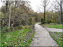 SJ9594 : Path to Trans Pennine Trail by Gerald England