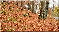 J3268 : Autumn leaves, Minnowburn, Belfast (5) by Albert Bridge