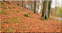 J3268 : Autumn leaves, Minnowburn, Belfast (5) by Albert Bridge