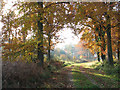 TG1622 : Autumn colours in Haveringland Wood by Evelyn Simak