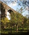 ST6579 : Apples below Huckford Viaduct by Derek Harper