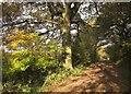 ST6879 : Community Forest Path by Derek Harper