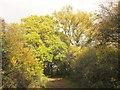 ST6879 : Bridleway near Parkgate Farm by Derek Harper
