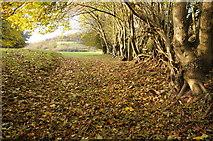 SO2620 : Autumn carpet by Philip Halling
