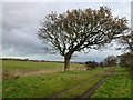 TF8336 : Tree and track west of South Creake by Richard Humphrey
