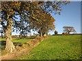 SY3197 : Oaks near Sector by Derek Harper