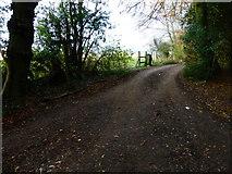 SU8213 : Bridleways cross on Chilgrove Hill by Shazz