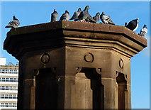 SK5803 : Pigeons on Mill Lane Bridge by Mat Fascione