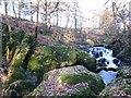 NT0199 : Mossy boulders, River Devon by Alan O'Dowd