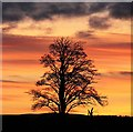 NT5071 : A sunset silhouette by Walter Baxter