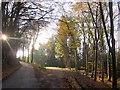 SY3597 : Champernhayes Lane by Derek Harper