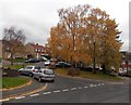 ST3090 : Golden leaves on silver birches in Malpas, Newport by Jaggery