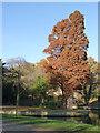 SK5437 : Specimen tree in Highfields Park by Alan Murray-Rust