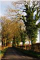 J1776 : Ballydonaghy Road by Robert Ashby