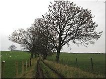 SE0950 : Lane towards High Lathe by John Slater