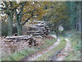 TF8014 : Pile of logs on Washpit Drove, South Acre by Richard Humphrey