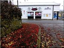 H4572 : Fallen berries, Omagh by Kenneth  Allen