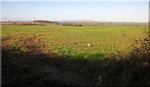 SX3158 : Field near Bake by Derek Harper