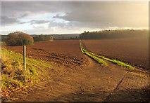 SX7962 : Track, Dartington by Derek Harper