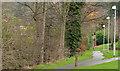J3876 : Path, Knocknagoney, Belfast by Albert Bridge