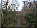 SE4533 : Small fallen tree across a Hartly Wood path by Christine Johnstone