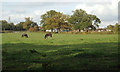 SP0675 : Paddock with horses near Malthouse Farm, Wythall by Robin Stott