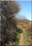 SS8677 : Public footpath at the northern edge of Merthyr Mawr Warren by eswales
