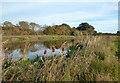 SU9180 : The Jubilee River by Des Blenkinsopp