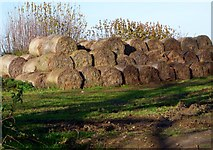 TQ2116 : Haystack, Furners Lane, Henfield by nick macneill