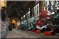 SJ4066 : Christmas in the Cloisters by Jeff Buck