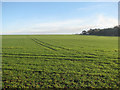 TL5048 : Sunlit wheatfield in December by John Sutton