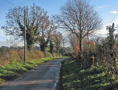 TL5048 : Pampisford: Beech Lane by John Sutton