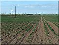 TF4450 : Flat farmland at Wrangle Tofts by Mat Fascione