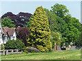 ST5675 : Trees, Saville Road, Bristol by Stephen Richards