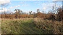 TQ5782 : Path to lakes on a sunny winter day by Roger Jones