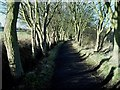 SE9998 : Wintry trees on the former Scarborough to Whitby railway by Christopher Hall