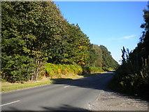 SK5852 : Longdale Lane near Sansom Wood by Richard Vince