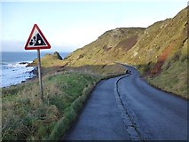 C9444 : Road to Giant's Causeway by Kenneth  Allen
