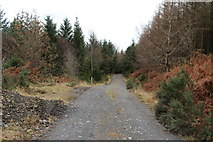 NX4465 : Kirroughtree Forest Trails by Billy McCrorie