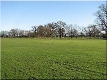 TL2966 : Hilton cricket square in winter by John Sutton