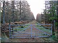 NH7061 : Gateway into Millbuie Forest by Richard Dorrell