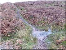 SO2718 : Stream on the Sugar Loaf / Mynydd Pen-y-fal by Jeremy Bolwell