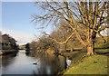 SE0262 : River Wharfe at Hebden Suspension Bridge by Derek Harper