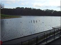 SE3337 : Waterloo Lake, Roundhay Park by JThomas