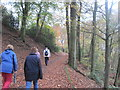 SD8602 : Boggart Hole Clough, Manchester by Tricia Neal