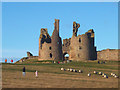 NU2521 : People and sheep at Dunstanburgh Castle by Karl and Ali