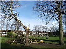 TQ7868 : Storm damage in St Mary's Cemetery (2) by David Anstiss